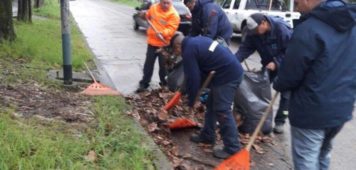 Trabajos de limpieza y recolección de residuos