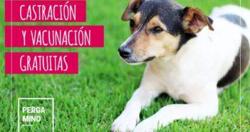 CASTRACION-Y-VACUNACION